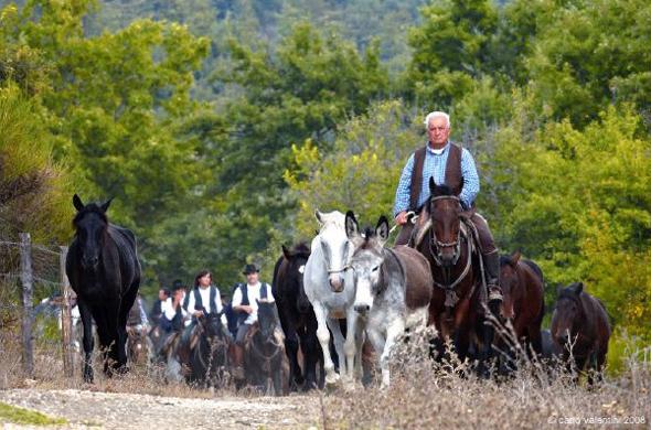 Allevamento Santoni - Turismo Equestre 0932a386783